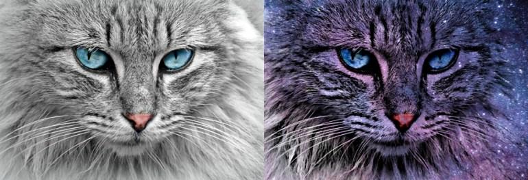 Double Exposure using PicsArt