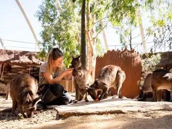 kangaroos hop in Wild Life Sydney Zoo