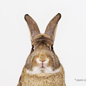 animal-art-photography-sharon-montrose-1.php