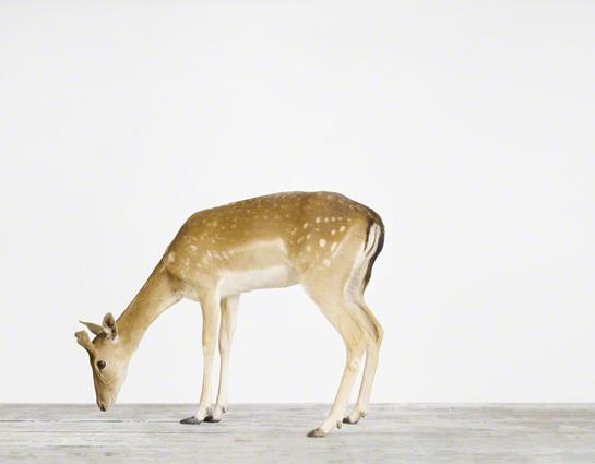 animal-art-photography-sharon-montrose