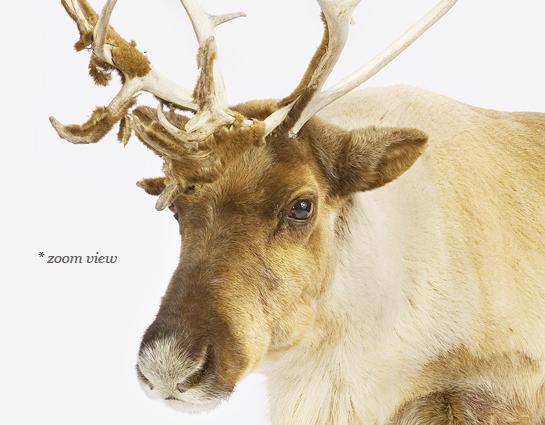 animal-prints-animal-art-photography-02