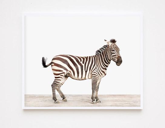 animal-prints-animal-art-photography-03