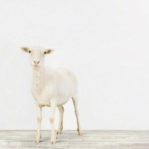 animal-prints-animal-art-photography