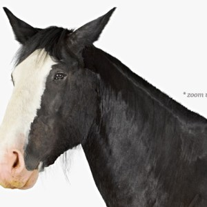 animal-prints-animal-art-photography-horse-1