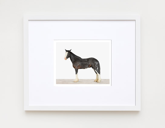 animal-prints-animal-art-photography-horse
