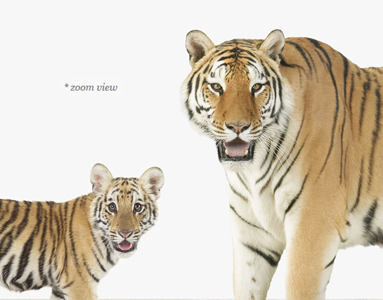 baby-animal-prints-animal-art-photography-kindred-2