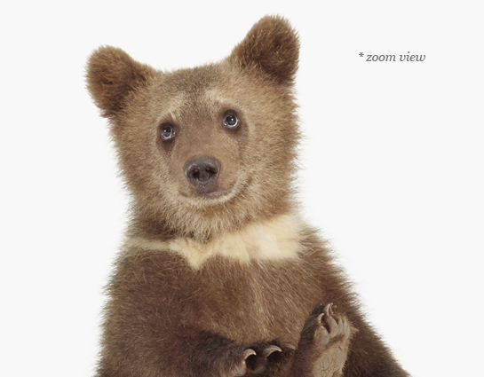 baby-animal-prints-nursery-art-photography-01