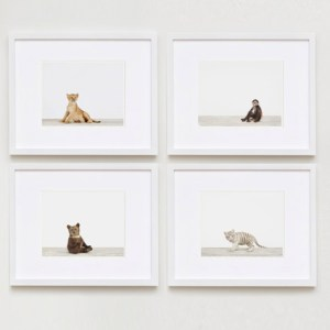 baby-animal-prints-nursery-art-photography-04
