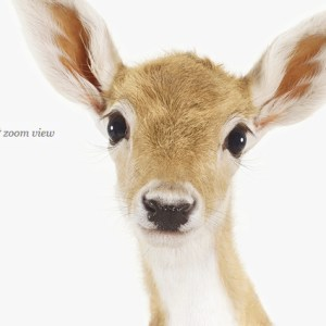 baby-deer-decor-art-for-nursery