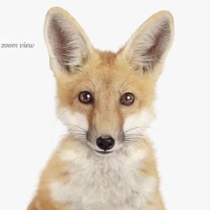 fox-decor-art-for-nursery