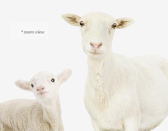 baby-animal-prints-nursery-art-1.php