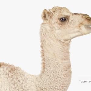 image-1.baby-animal-prints-nursery-art