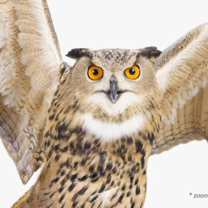 imagesharon-montrose-bird-art2.php