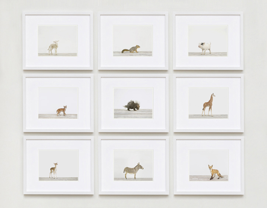 imagebaby-animal-prints-nursery-art2.php