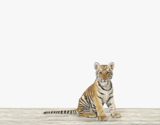 baby-animal-prints-nursery-art