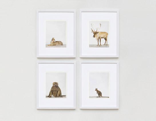sharon-montrose-animal-photography-05