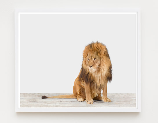 sharon-montrose-animal-photography-print-03