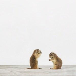 sharon-montrose-animal-photography