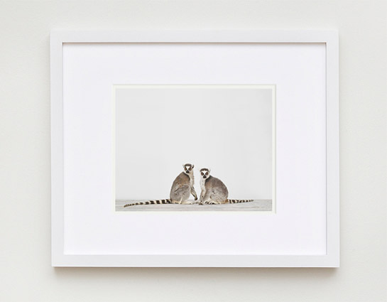 sharon-montrose-animal-photpgraphy-01