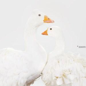 sharon-montrose-birds-photography