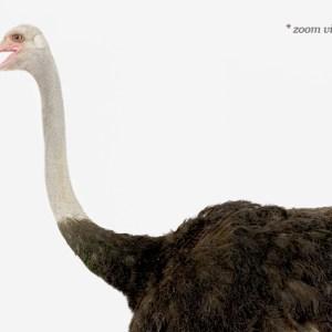 sharon-montrose-birds-photography-2.php