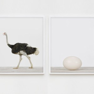 sharon-montrose-birds-photography-4.php