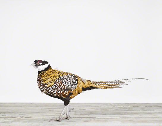 sharon-montrose-birds-photography.php