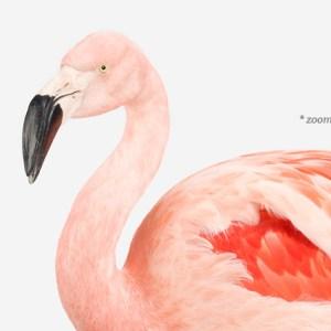 sharon-montrose-flamingo-bird-ar-2.php