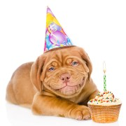 What's a dog's favorite dessert? Animal Jokes