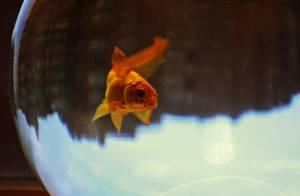 Fish Animal Jokes #3