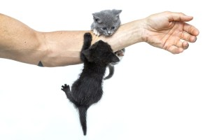 Kittens on arm