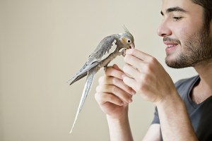 Cockatiel with Man