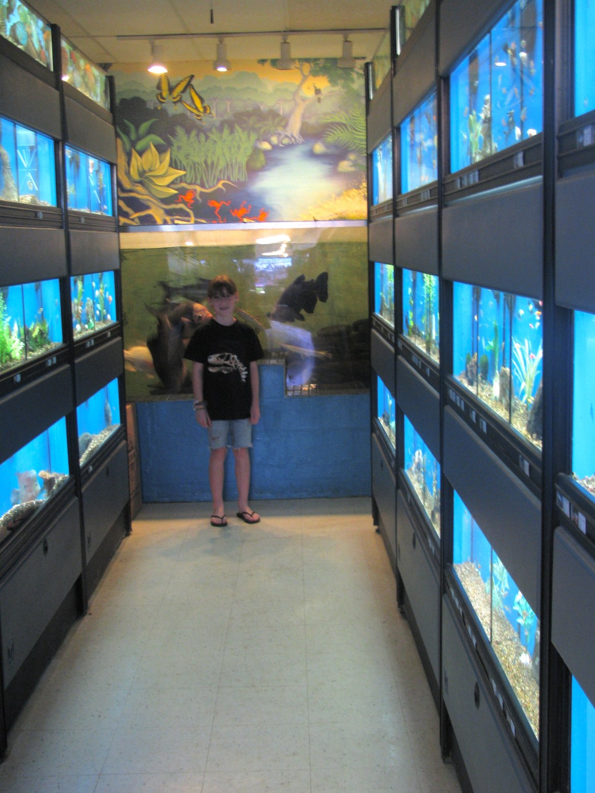 The Animal Store Fish Department