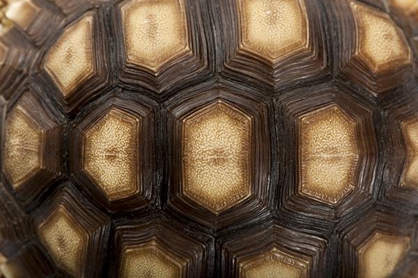 Pet Turtles Tortoises Reptiles