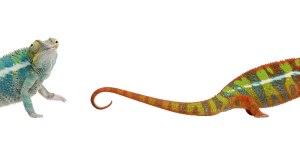 The Animal Store Reptiles