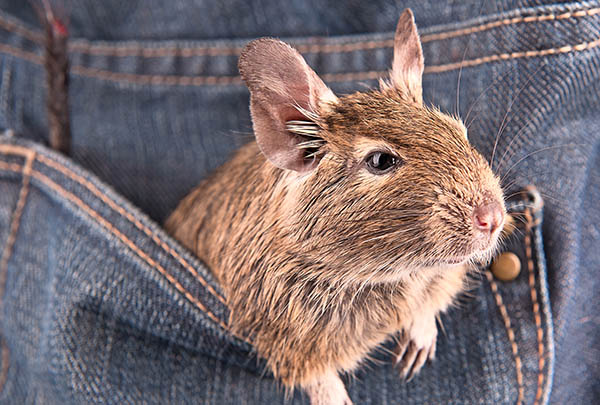 Pocket pets—The Animal Store carries pocket pets and supplies