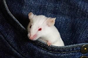 Mouse pocket pets