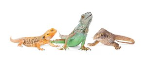The Animal Store reptiles