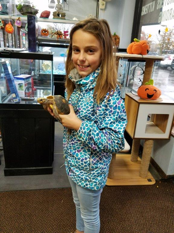 The Animal Store Amelia and Red Foot Tortoise