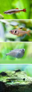 Free tropical fish