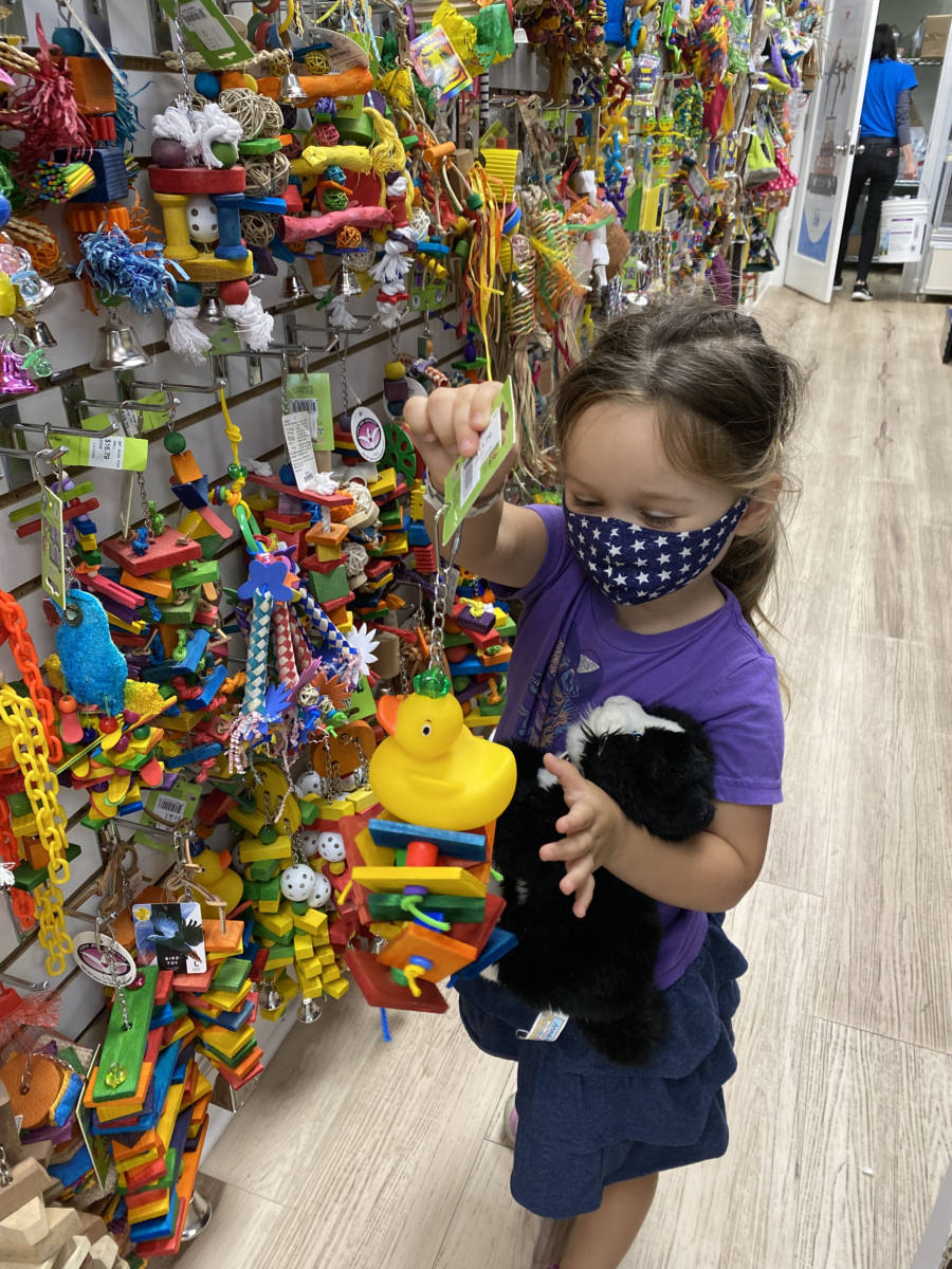 Visit the Animal Store: Vika and bird toys