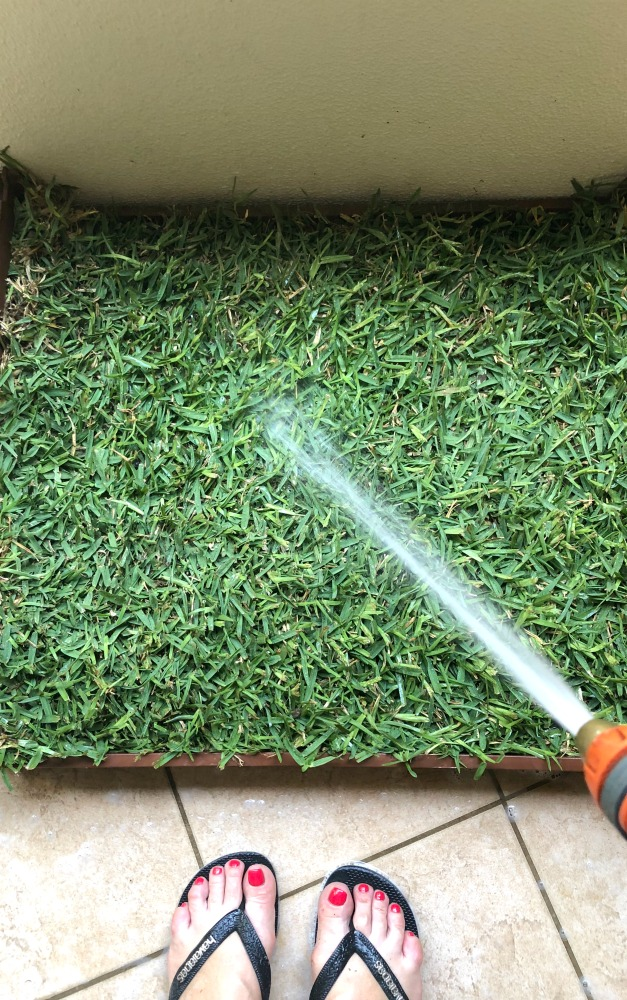 real grass dog toilet on a budget