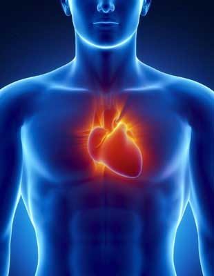 Fundamentals of pharmacology - heart stimulation