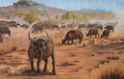 Buffalo Dust, 61x91cm, Oil on Canvas