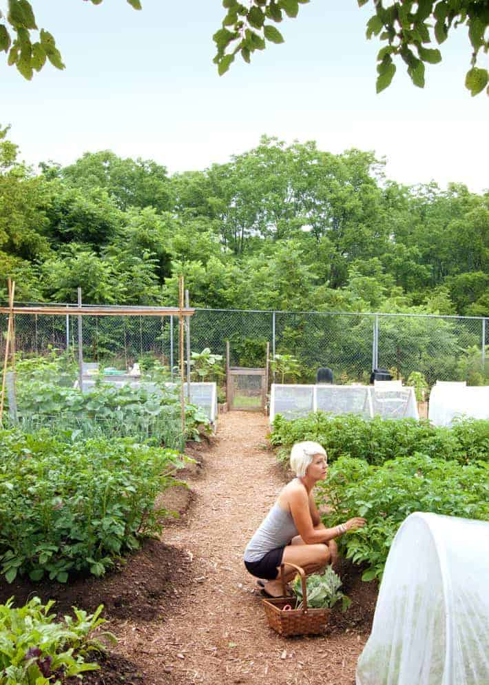 Vegetable Gardening as Therapy. | Playing in the dirt ... on Gardening  id=41352