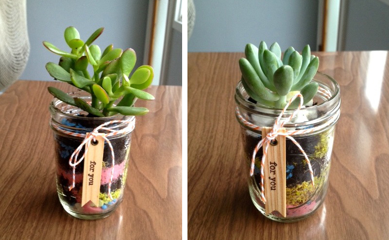 Holiday Diy Gift Succulent Terrarium The Art Pantry