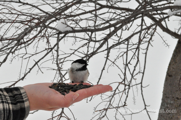 the artyologist: image of feeding a chickadee in your hand