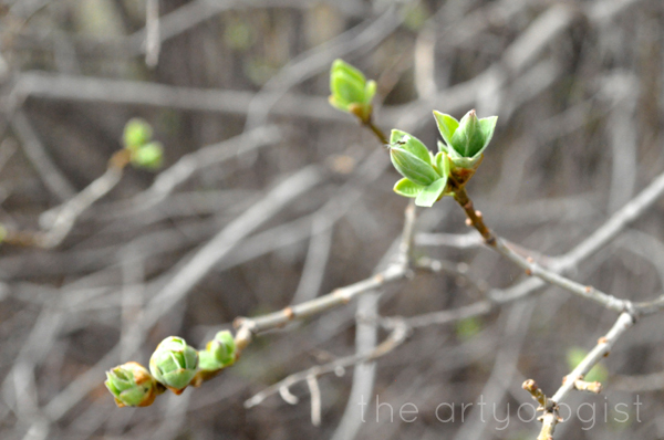 the artyologist image of spring leaves budding on a tree