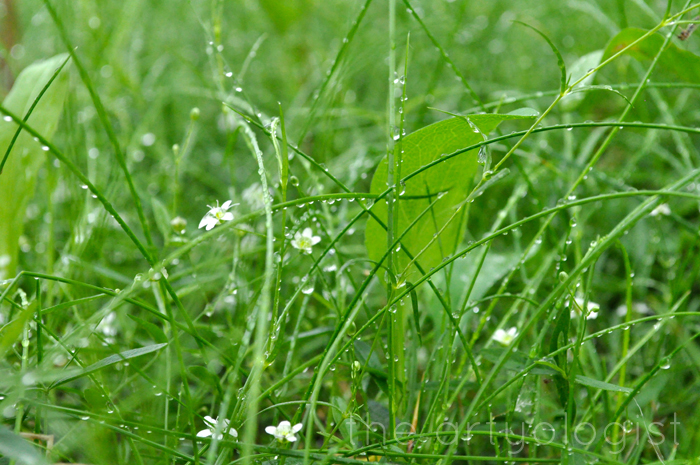 image of grassflowers the artyologist