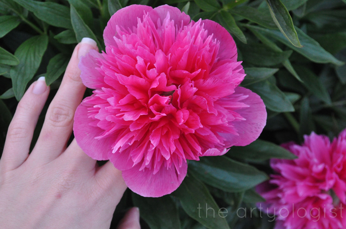 hand and peony the artyologist